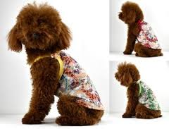 best cheap dog clothes for small dogs