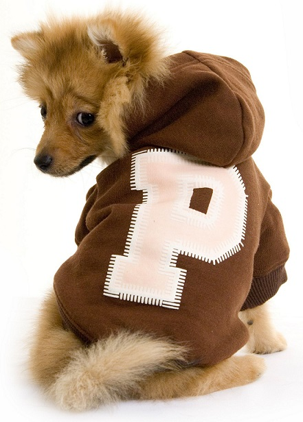 All About Dog Hoodie