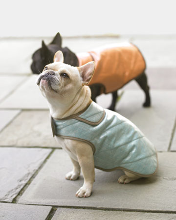 All About Dog Jackets