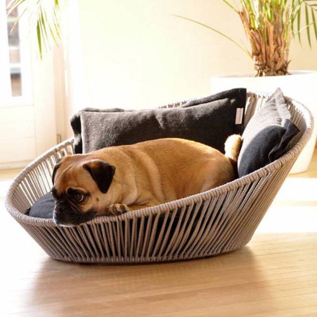 All About Fancy Dog Beds