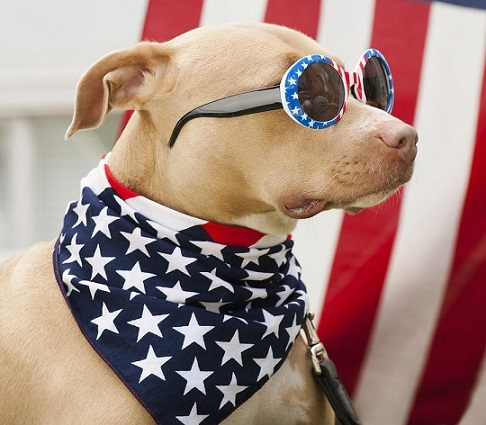American Flag Red White And Blue Bandana for Dogs