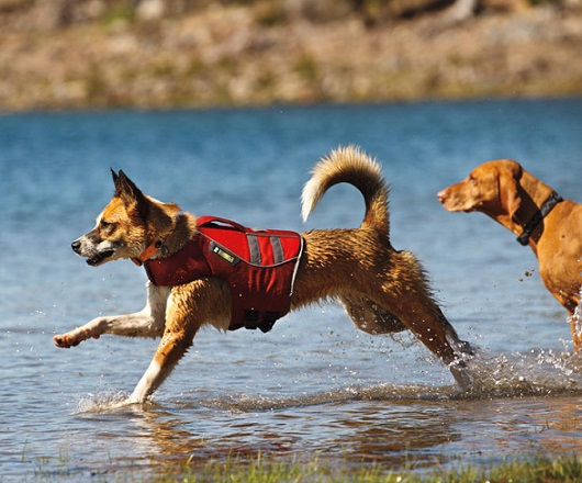 Big Float Coat Dog Life Jackets