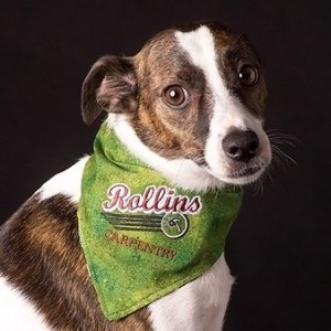 Cool Custom Embroidered Dog Bandanas