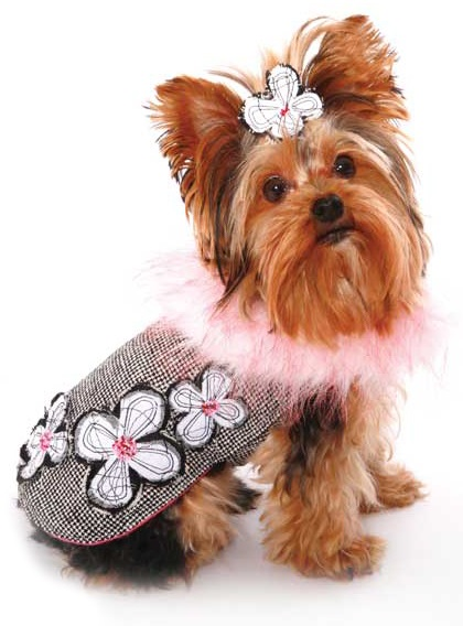 Cute and Stylish Small Dog Clothes
