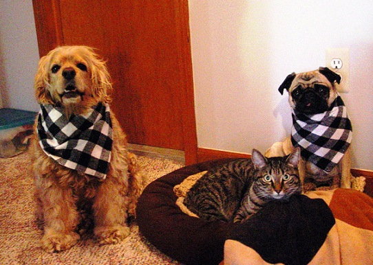 Get Black And White Bandana For Your Dog