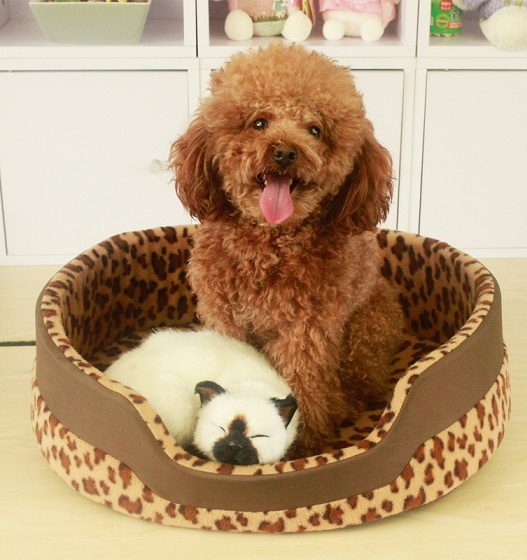 Get Cheap Fancy Dog Beds Online