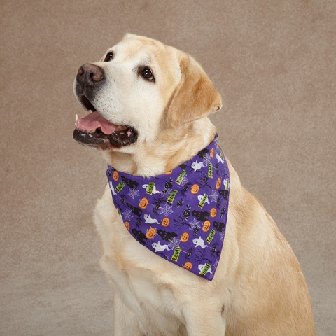Get Purple Camo Bandana For Your Dog