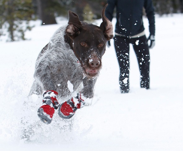 Get The Best Dog Snow Shoes
