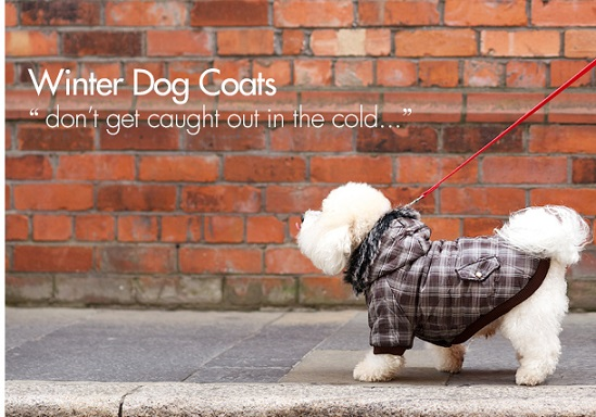 Get Winter Pet Clothes For Dogs
