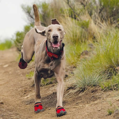 Red Dog Running Shoes