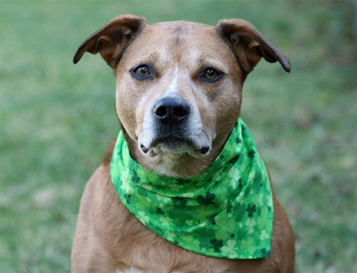 Stylish Neon Green Bandana