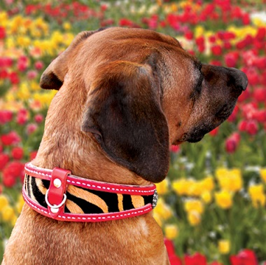 Where To Find Custom Leather Dog Collars