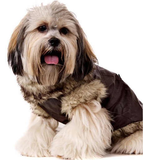 Brown Dog Fur Coat