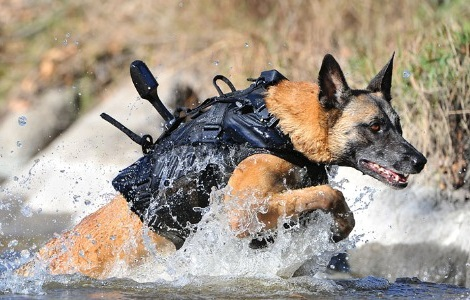 Bulletproof Tactical Dog Gear