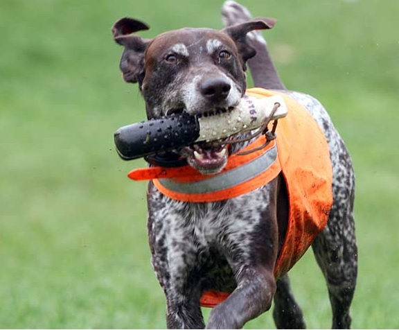 Buy New Reflective Hunting Dog Collars