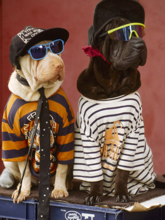 Cool Pet Clothes For Dogs