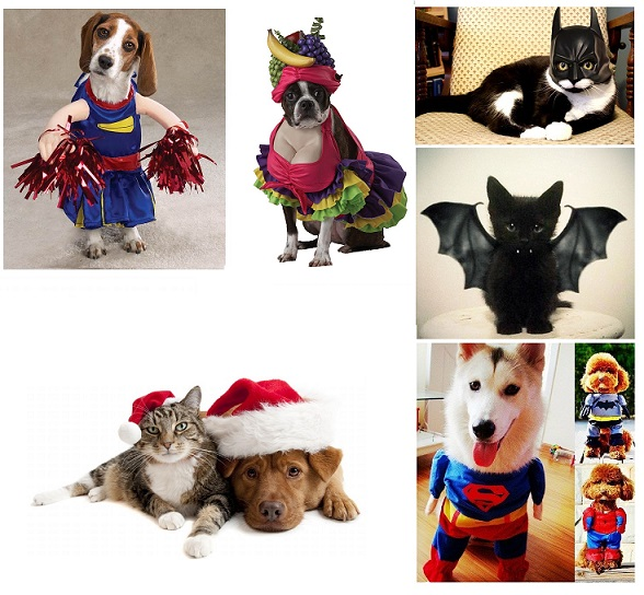 Cool Trendy Funny Pet Costumes