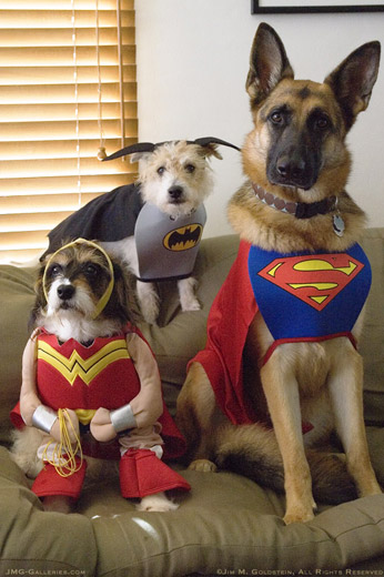 Discover The Best Pet Costumes