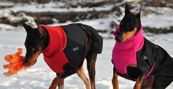 Finding Your Dog a Warm Winter Coat