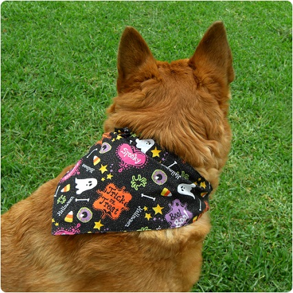 Get Cheap Bandanas For Dogs