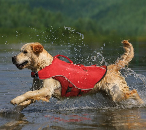Get Quality Dog Camping Gear