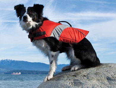 Shop For Dog Hiking And Camping Gear