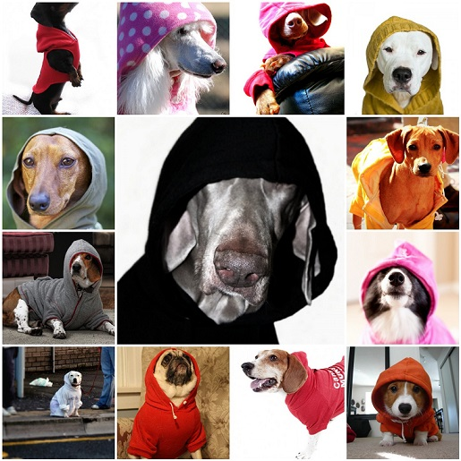 Shop for Cheap Custom Dog Hoodies