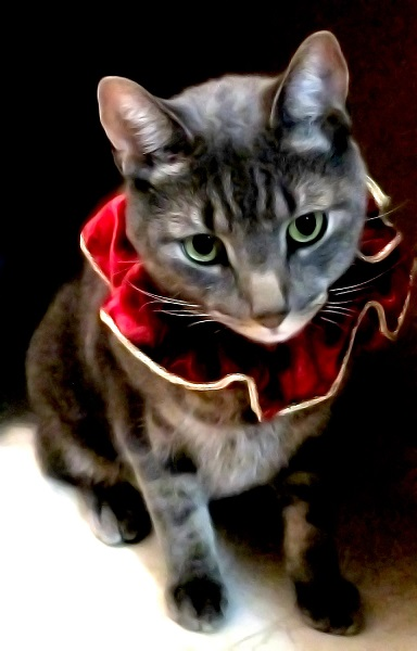 Shop for Cheap Pet Clothes For Cats
