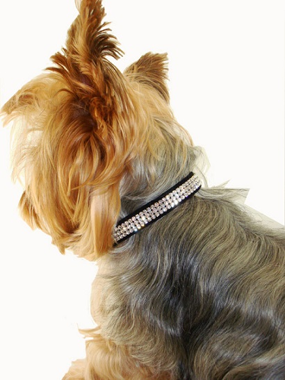 Stylish Rhinestone Dog Collars For Small Dogs