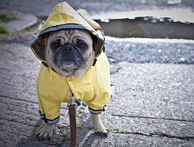 The Benefits of Small Dog Raincoat
