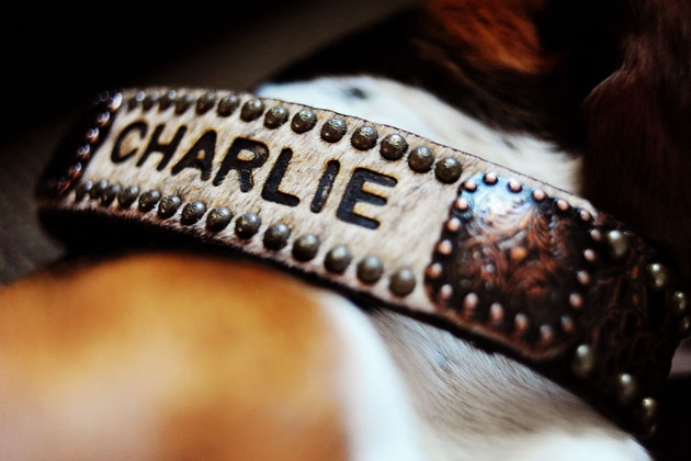 The Best Personalized Leather Dog Collars
